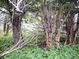arbre mort pensée du jour