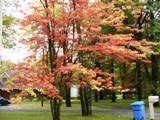 L'automne couleurs, pensée du jour