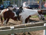 cheval et selle pensée du jour