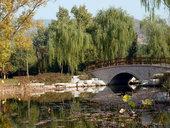pont, eau, saule pleureur pensée du jour