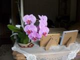 Fleurs sur table ancienne pensée du jour