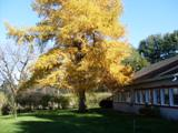 arbre mélèse pensée du jour