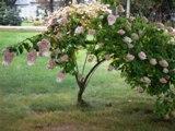 pensée du jour petit arbre