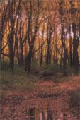arbre, automne , eau pensée du jour