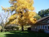 pensee du jour arbre mélèse